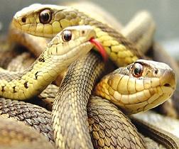 084a-serpenti