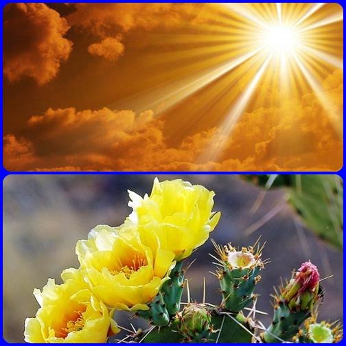 Con Dio dobbiamo aver fiducia. Non temiamo! Andiamo avanti senza mormorare o dubitare. La spina di oggi sarà il fiore di domani!