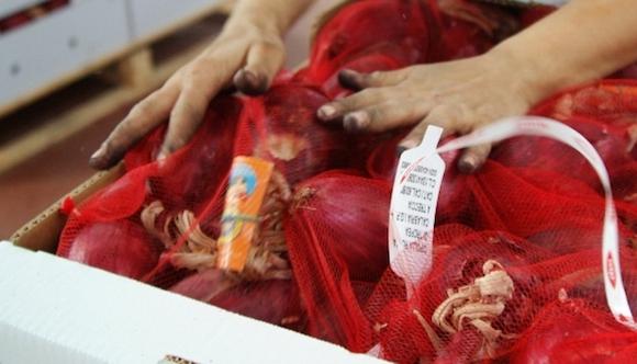 Il bollino del Consorzio di tutela della cipolla rossa di Tropea Calabria Igp
