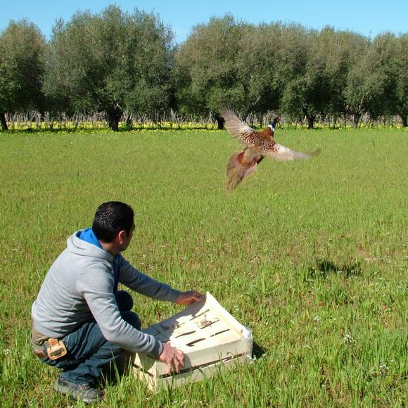 Una giornata di caccia