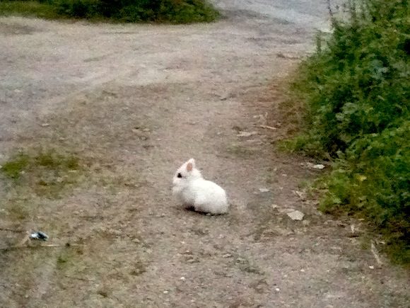 Il Bianconiglio di viale Tondo