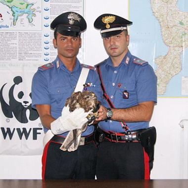 Nicotera: Il falco ritrovato