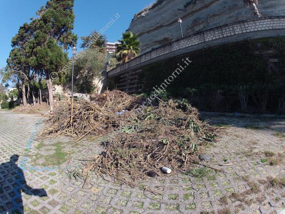 Cumuli di foglie e di rami secchi - foto Libertino