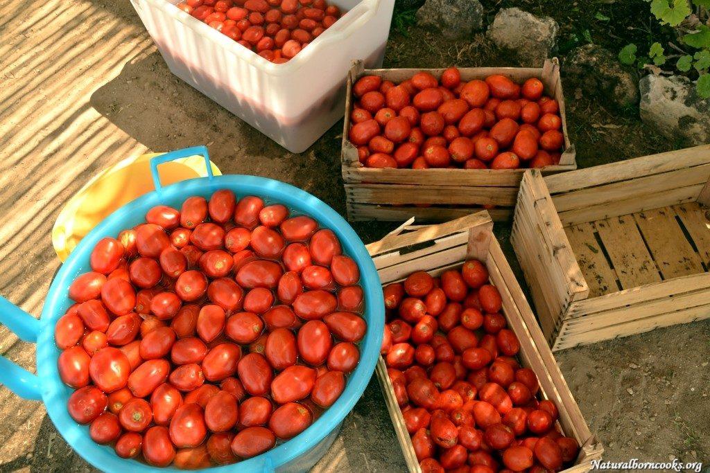 pomodori_conserve_preparazione